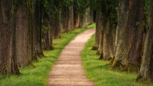 Path towards what is detoxing?