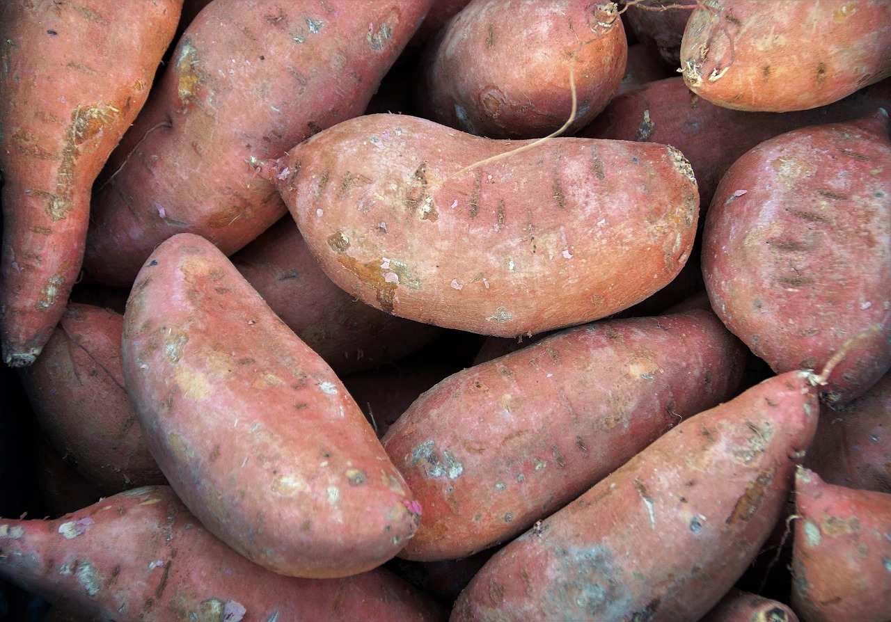 sweet potato and resistant starches